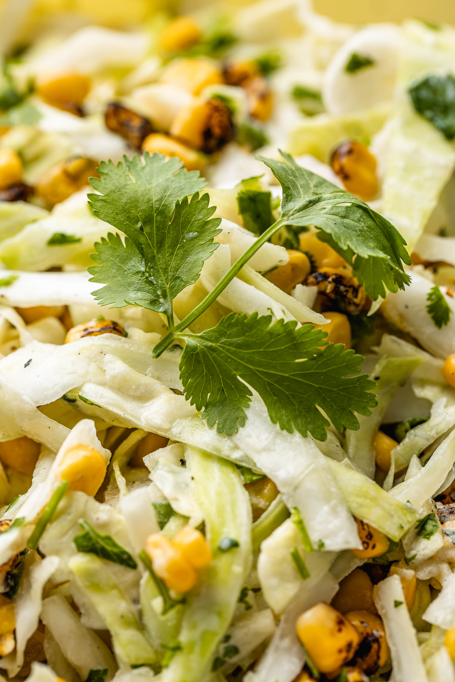 coleslaw with chopped cabbage, cilantro, jalapeno peppers, lime, and a sprig of green cilantro